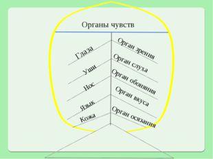 Органы чувств Глаза Орган зрения Уши Орган слуха Нос Орган обоняния Язык Орга
