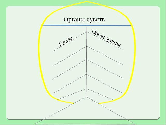 Органы чувств Глаза Орган зрения
