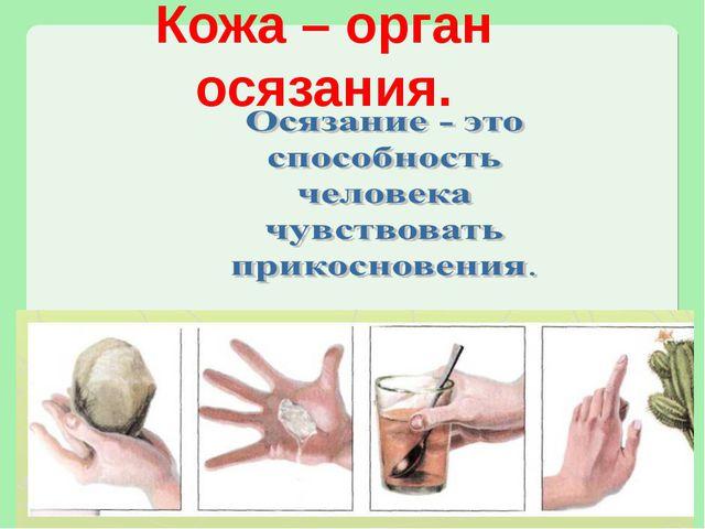 Кожа – орган осязания.