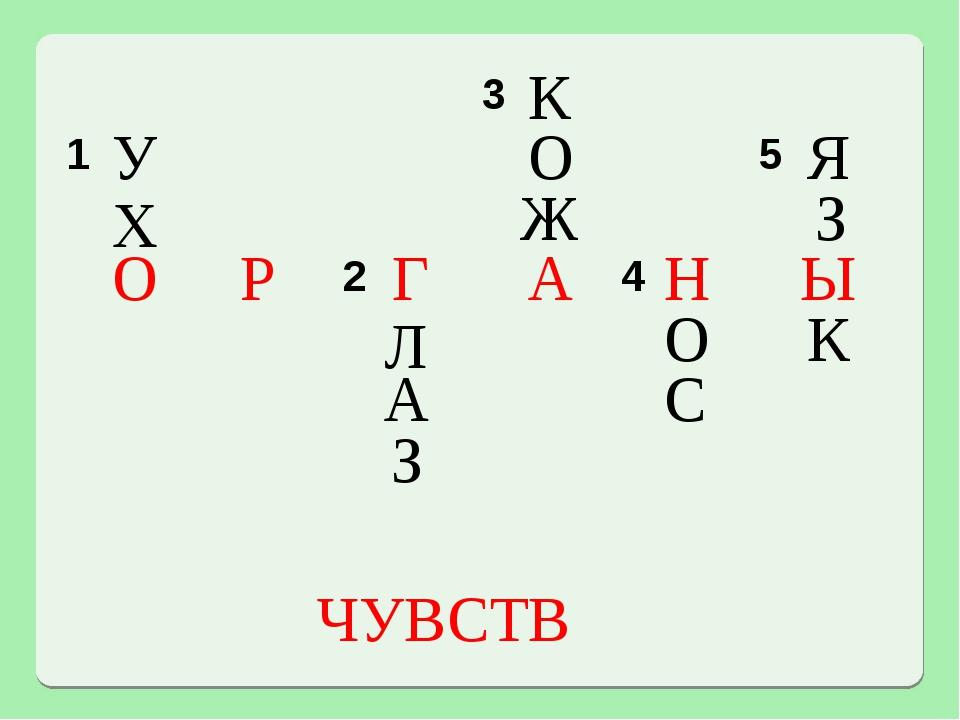 У Х О Г Л А З К О Ж А С Н О Я З Ы К Р ЧУВСТВ 3 1 5  2 4...