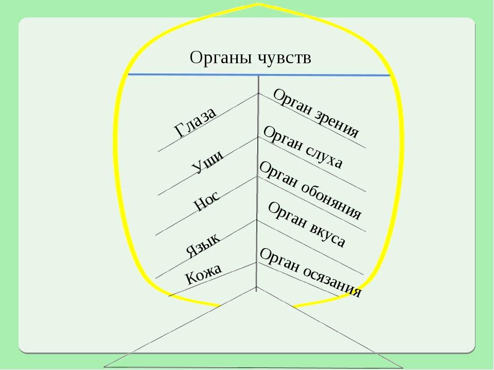 Органы чувств Глаза Орган зрения Уши Орган слуха Нос Орган обоняния Язык Орга...