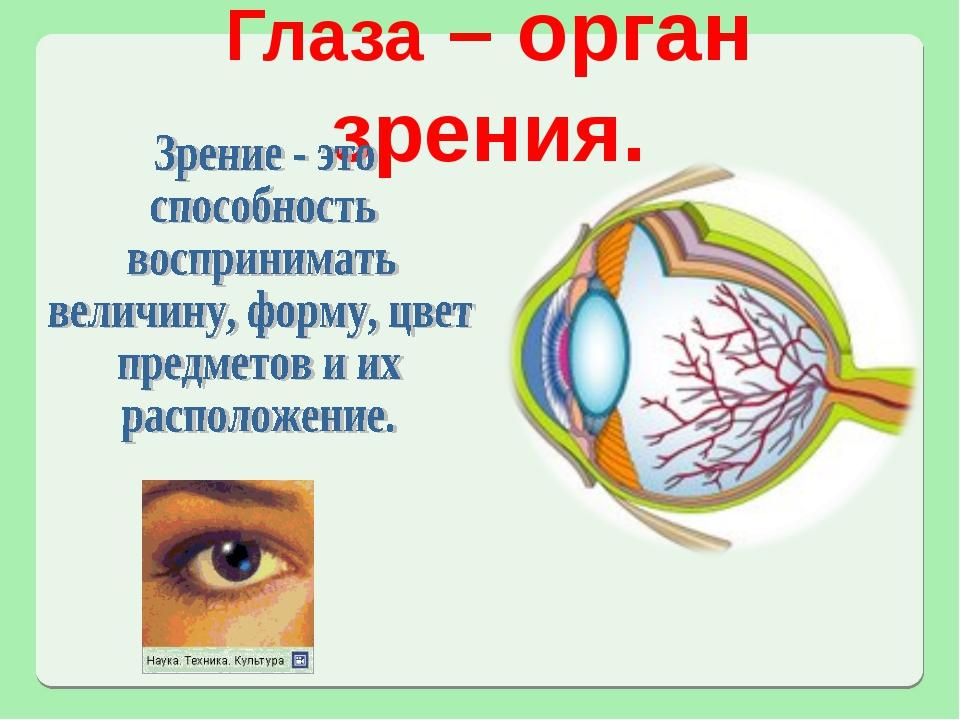Глаза – орган зрения.