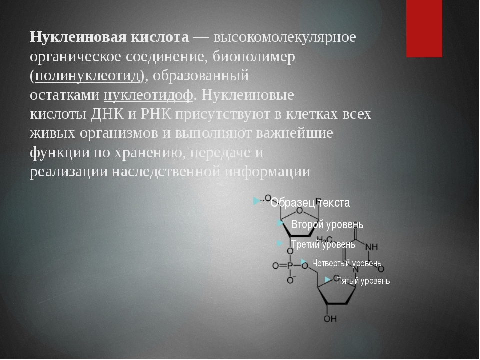 Нуклеиновая кислота— высокомолекулярное органическое соединение,биополимер...