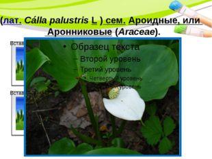 Белокры́льник болотный, илика́лла (лат.Cálla palustrisL ) сем.Ароидные, и