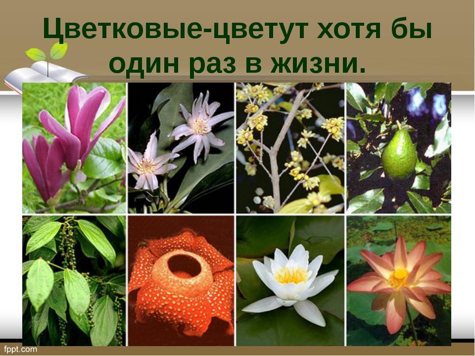 Цветковые-цветут хотя бы один раз в жизни.