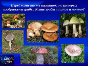 Перед вами шесть картинок, на которых изображены грибы. Какие грибы лишние и