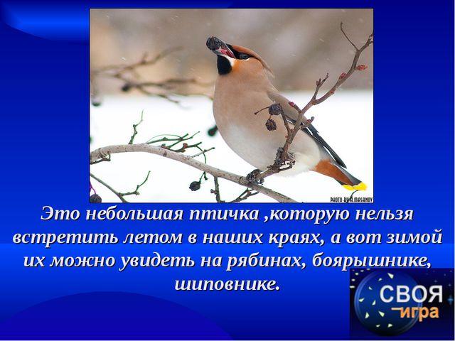 Это небольшая птичка ,которую нельзя встретить летом в наших краях, а вот зим...