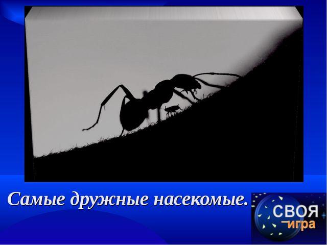 Самые дружные насекомые.