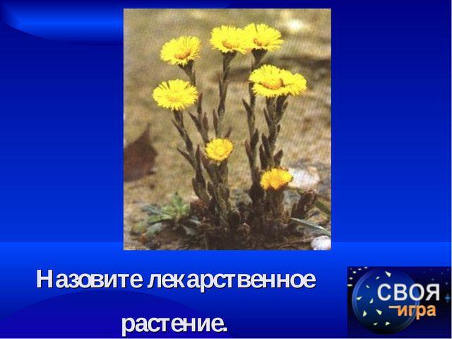Назовите лекарственное растение.
