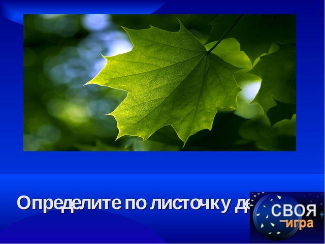 Определите по листочку дерево.
