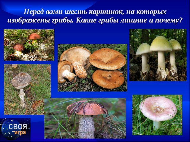 Перед вами шесть картинок, на которых изображены грибы. Какие грибы лишние и...