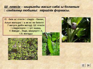 Шөптесін – шырынды жасыл сабағы болатын өсімдіктер тобының тіршілік формасы.