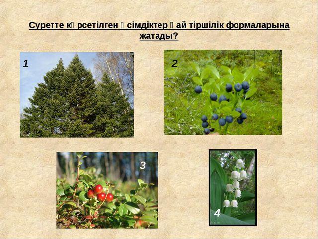 Суретте көрсетілген өсімдіктер қай тіршілік формаларына жатады? 1 2 3 4
