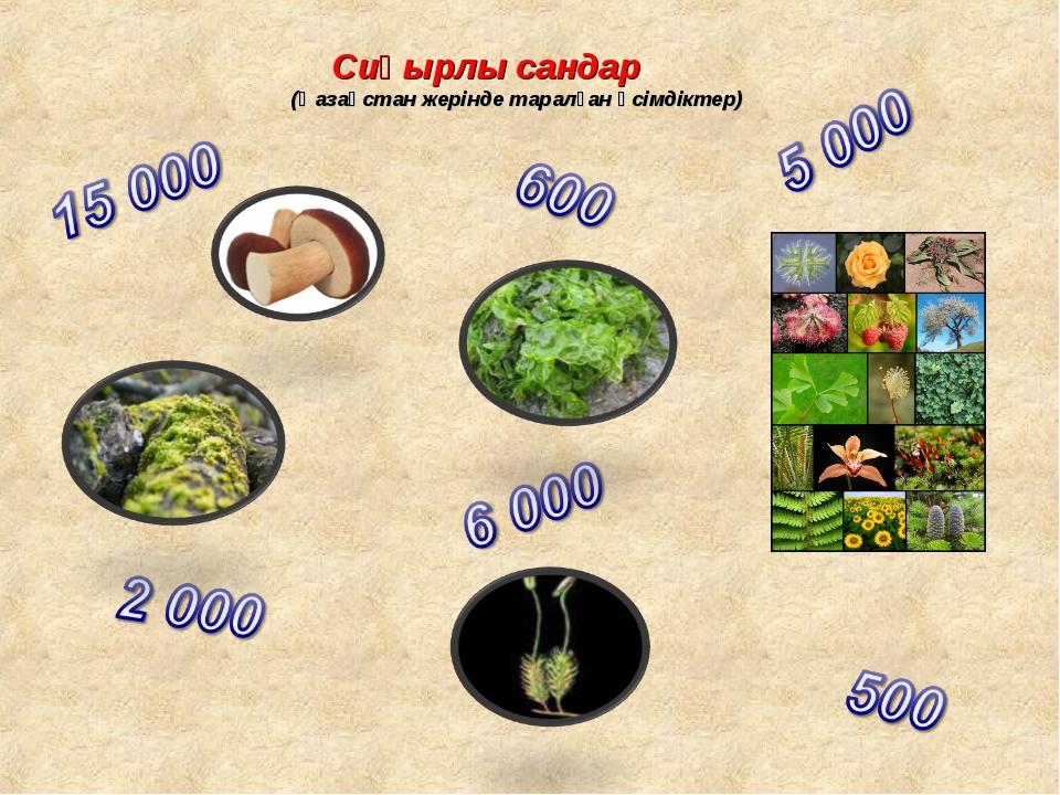 Сиқырлы сандар (Қазақстан жерінде таралған өсімдіктер)