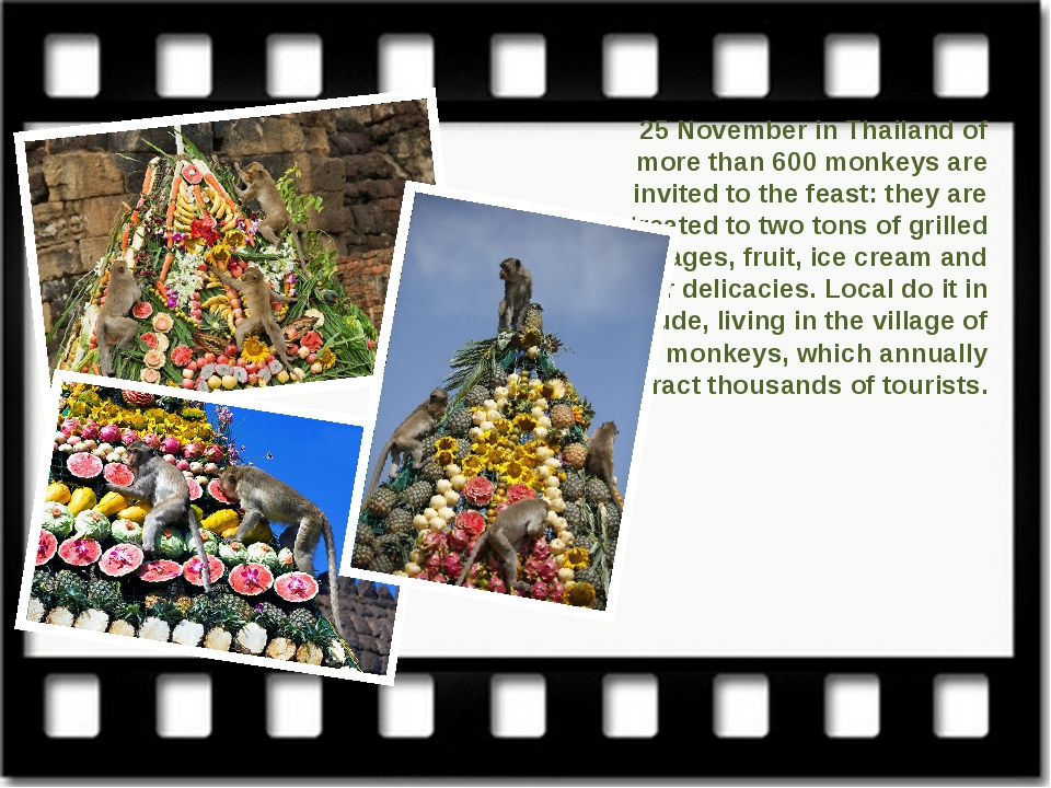 25 November in Thailand of more than 600 monkeys are invited to the feast: th...