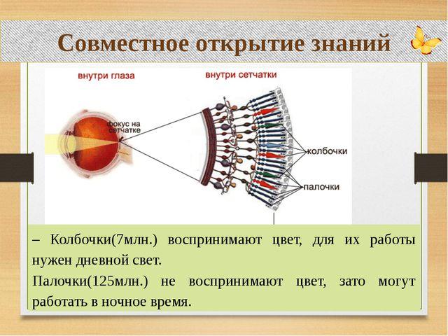 Совместное открытие знаний – Колбочки(7млн.) воспринимают цвет, для их работ...