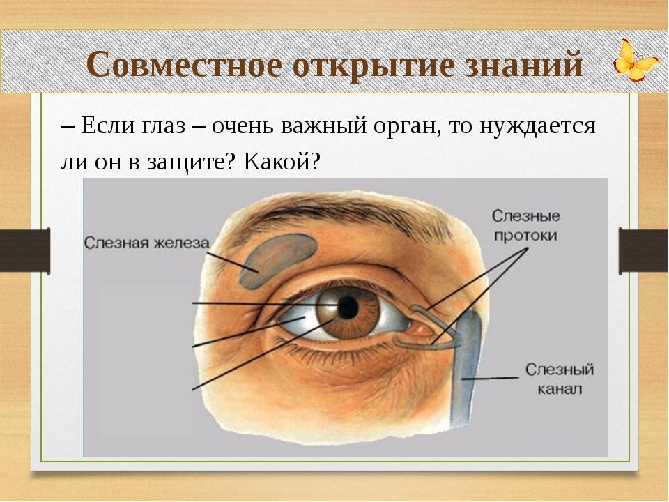 Совместное открытие знаний – Если глаз – очень важный орган, то нуждается ли...