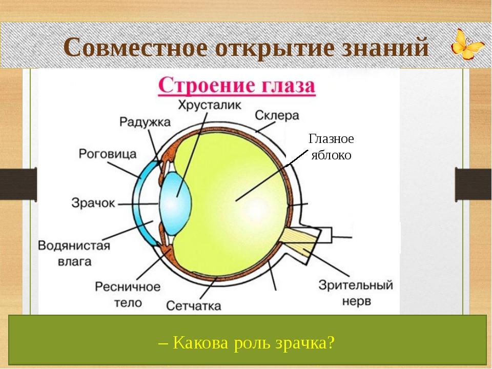Совместное открытие знаний Глазное яблоко – Перечислите части глаза. – Какая...