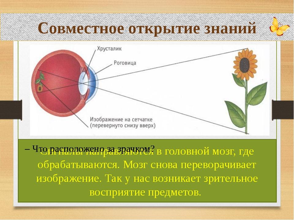 Совместное открытие знаний – Как вы думаете, в какой части глаза будут распо...