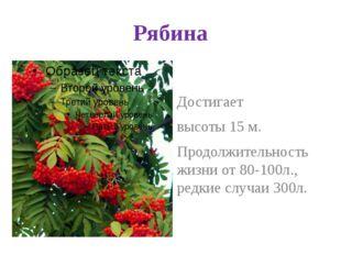Рябина Достигает высоты 15 м. Продолжительность жизни от 80-100л., редкие слу