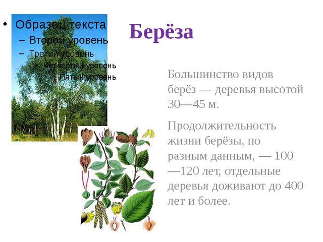 Берёза Большинство видов берёз— деревья высотой 30—45м. Продолжительность ж...