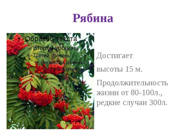 Рябина Достигает высоты 15 м. Продолжительность жизни от 80-100л., редкие слу...