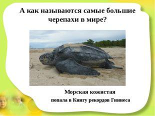 А как называются самые большие черепахи в мире? Морская кожистая попала в Кни