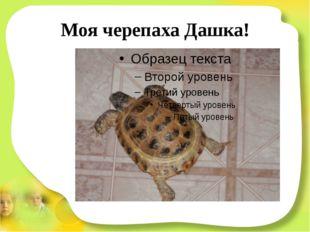 Моя черепаха Дашка!