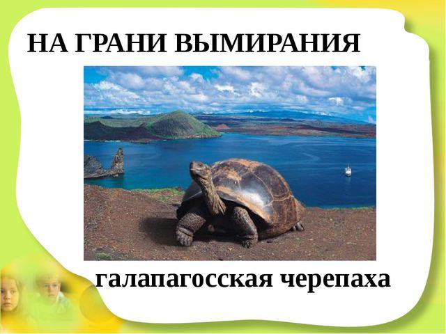 НА ГРАНИ ВЫМИРАНИЯ галапагосская черепаха