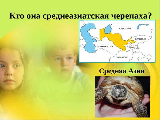 Кто она среднеазиатская черепаха? Средняя Азия