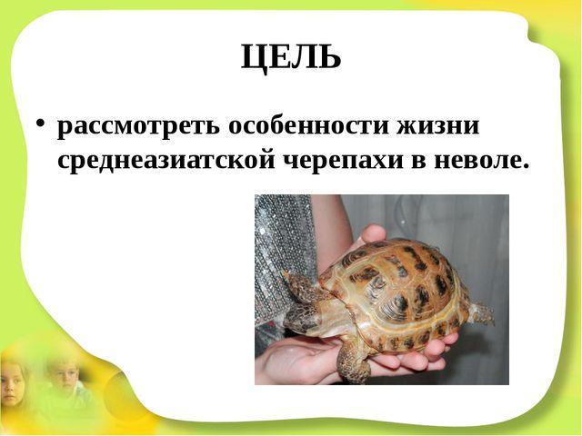 ЦЕЛЬ рассмотреть особенности жизни среднеазиатской черепахи в неволе.