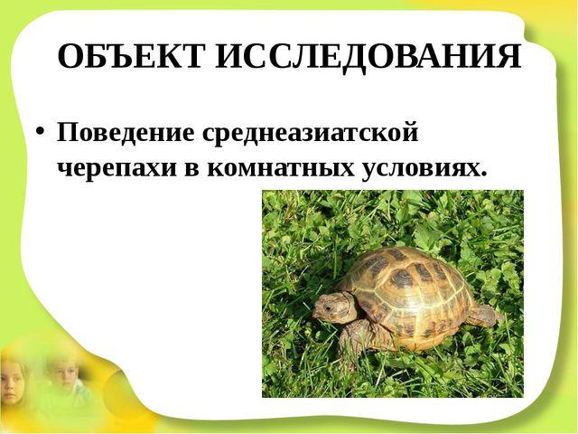 ОБЪЕКТ ИССЛЕДОВАНИЯ Поведение среднеазиатской черепахи в комнатных условиях.