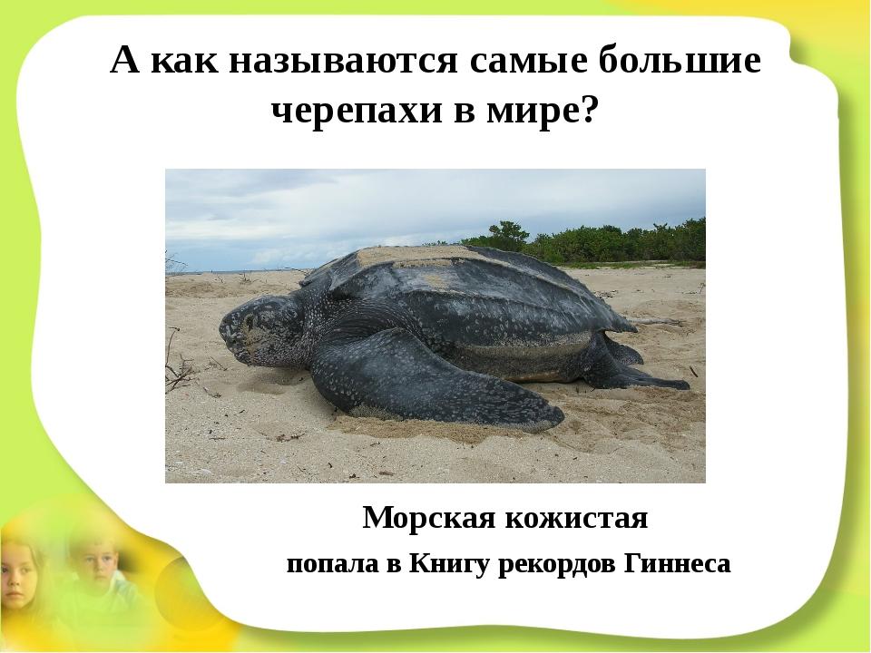 А как называются самые большие черепахи в мире? Морская кожистая попала в Кни...