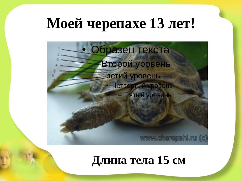Моей черепахе 13 лет! Длина тела 15 см