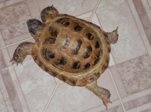 E:\Малая академия\Ульяна\фото черепаха\P1260363.JPG