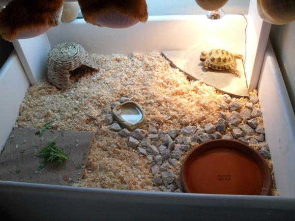 Террариумы для черепах сухопутных