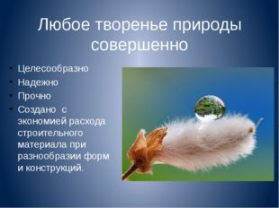 Любое творенье природы совершенно Целесообразно Надежно Прочно Создано с экон