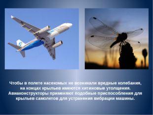 Чтобы в полете насекомых не возникали вредные колебания, на концах крыльев им