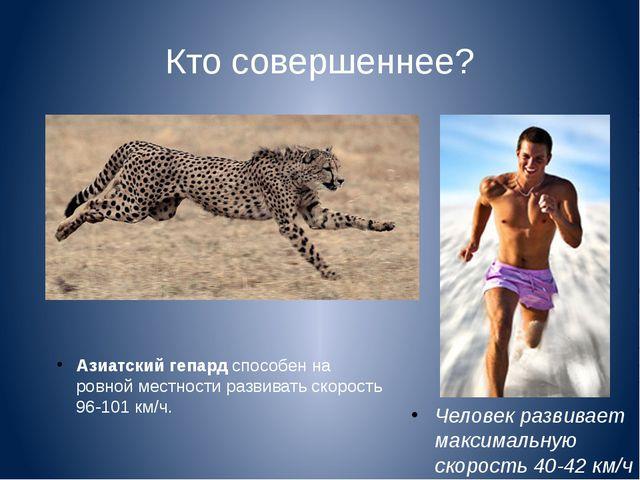 Кто совершеннее? Азиатский гепард способен на ровной местности развивать скор...