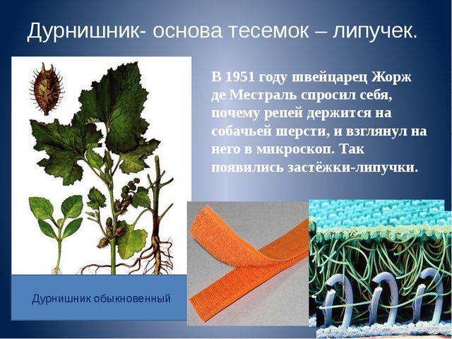 Дурнишник- основа тесемок – липучек. В 1951 году швейцарец Жорж де Местраль с...