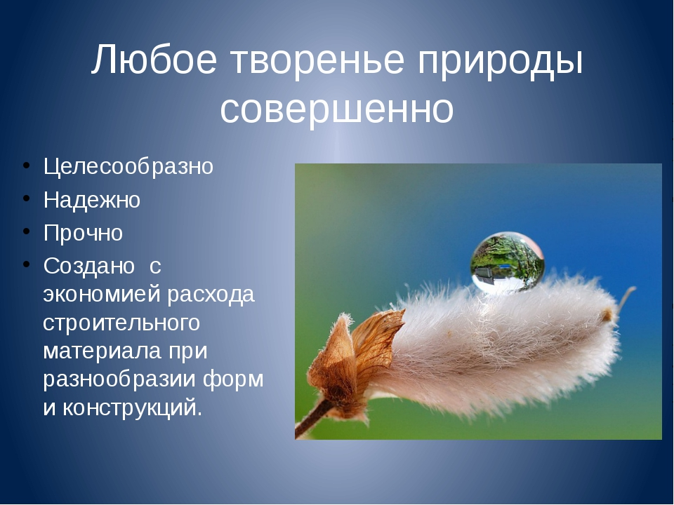 Любое творенье природы совершенно Целесообразно Надежно Прочно Создано с экон...