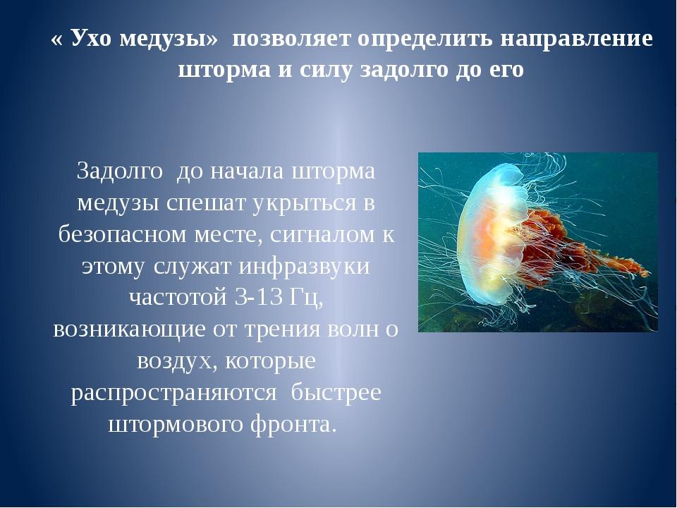 Задолго до начала шторма медузы спешат укрыться в безопасном месте, сигналом...