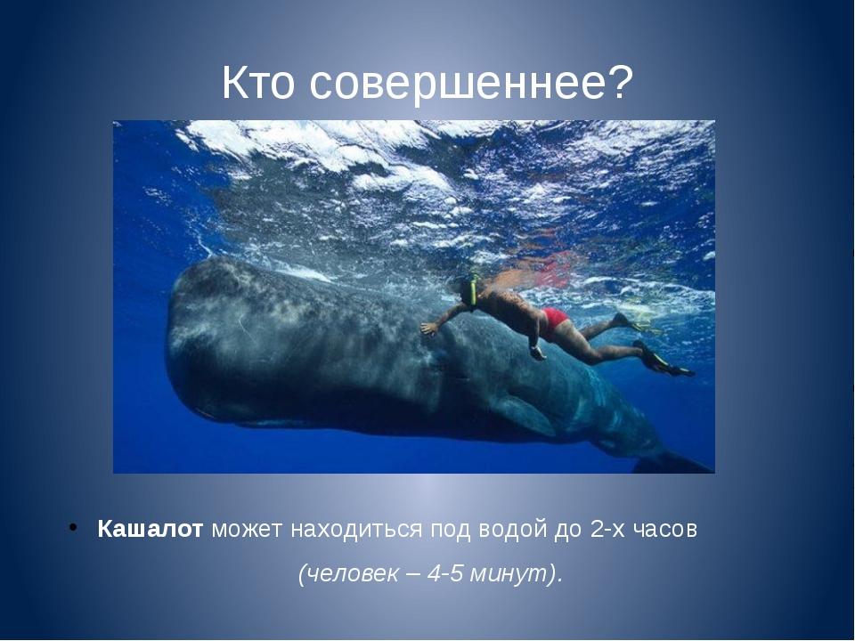 Кто совершеннее? Кашалот может находиться под водой до 2-х часов (человек – 4...