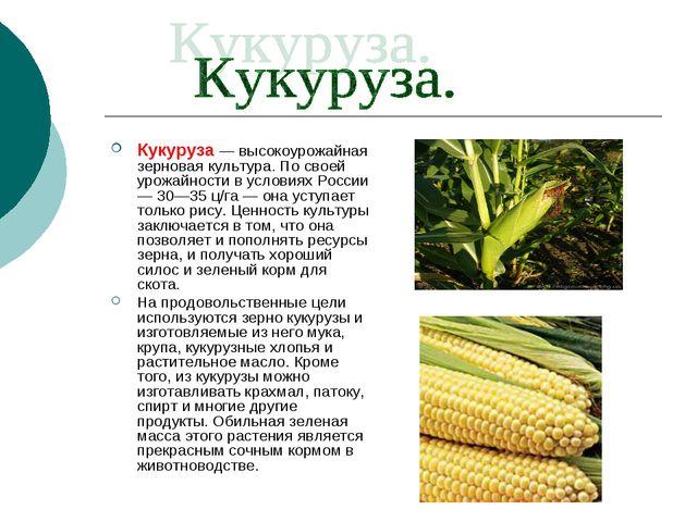 Кукуруза — высокоурожайная зерновая культура. По своей урожайности в условиях...