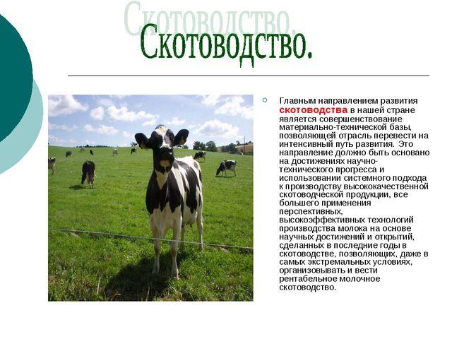 Главным направлением развития скотоводства в нашей стране является совершенст...