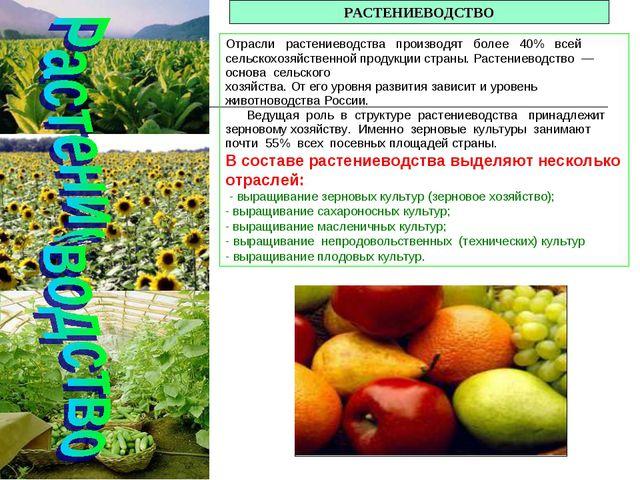 РАСТЕНИЕВОДСТВО Отрасли растениеводства производят более 40% всей сельскохозя...