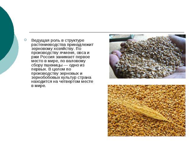 Ведущая роль в структуре растениеводства принадлежит зерновому хозяйству. По...