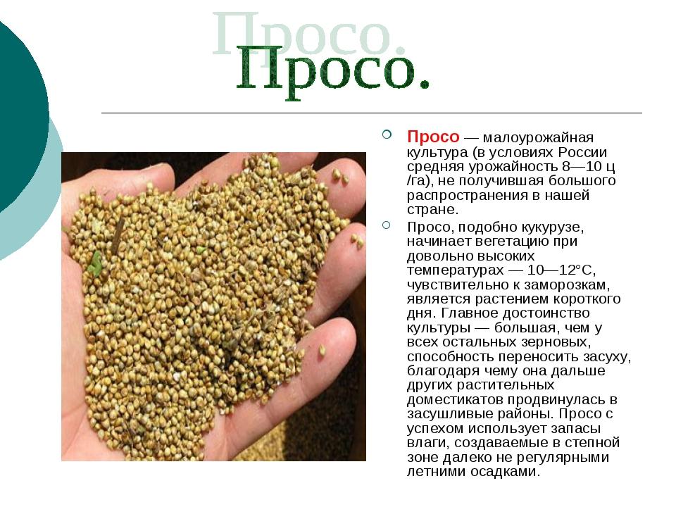 Просо — малоурожайная культура (в условиях России средняя урожайность 8—10 ц...