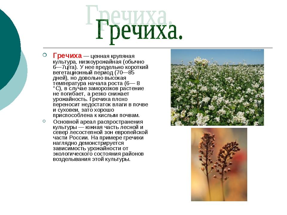Гречиха — ценная крупяная культура, низкоурожайная (обычно 6—7ц/га). У нее пр...