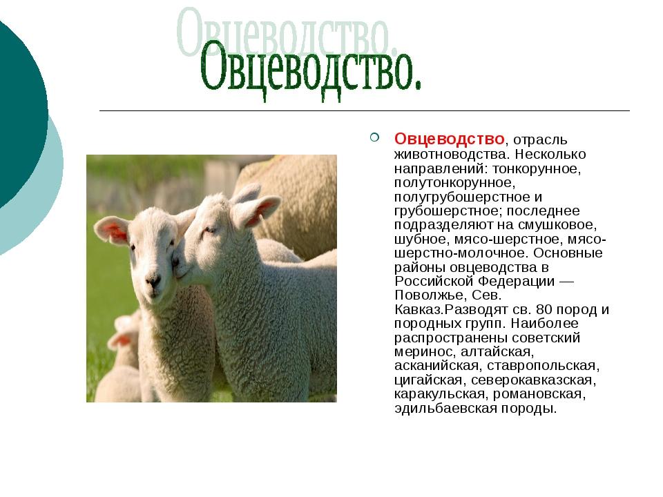 Овцеводство, отрасль животноводства. Несколько направлений: тонкорунное, полу...